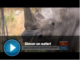 Video clip on Rhino dehorning in Zimbabwe